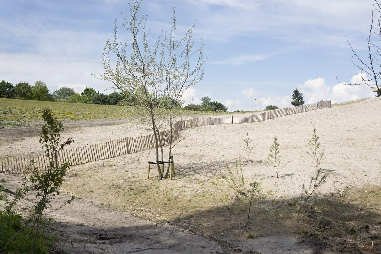 Dutch landscapes Almere Duin Nina Vossen 11